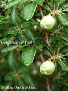depth-of-field-apples